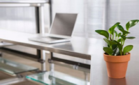 office plant benefits