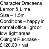 Character Dracaena Lemon & Lime  Size – 1.5m  Conditions – happy in normal office light or low  light areas  Outright Purchase - £120.00 + vat
