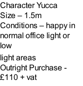Character Yucca Size – 1.5m  Conditions – happy in normal office light or low  light areas  Outright Purchase - £110 + vat