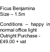 Ficus Benjamina Size – 1.5m  Conditions – happy in normal office light  Outright Purchase - £49.00 + vat