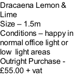 Dracaena Lemon & Lime Size – 1.5m  Conditions – happy in normal office light or low  light areas  Outright Purchase - £55.00 + vat