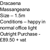 Dracaena Massangeana Size – 1.5m  Conditions – happy in normal office light  Outright Purchase - £89.50 + vat